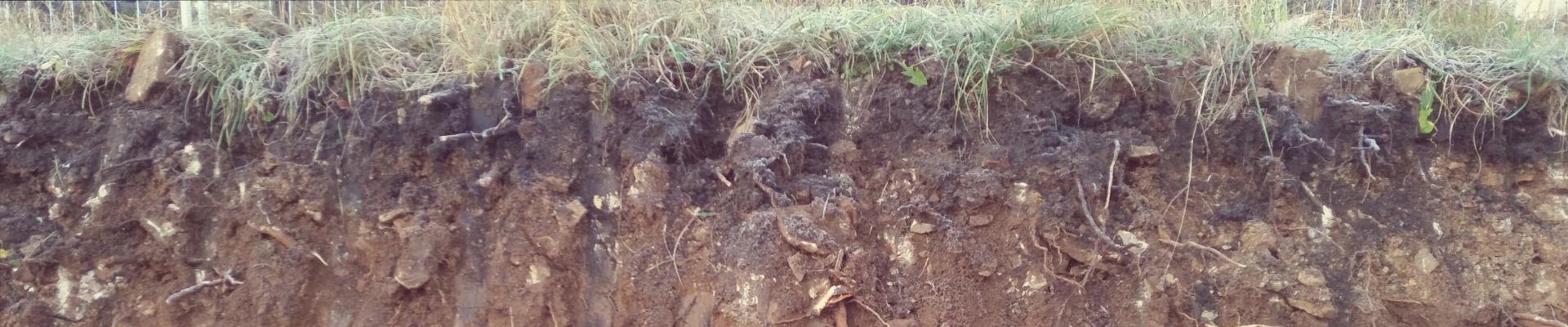 Homogenbereiche des Bodens